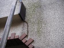 ふじみ野市、外壁に苔と汚れがこびりついた状態