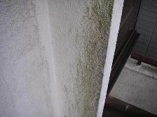 外壁のカビの写真