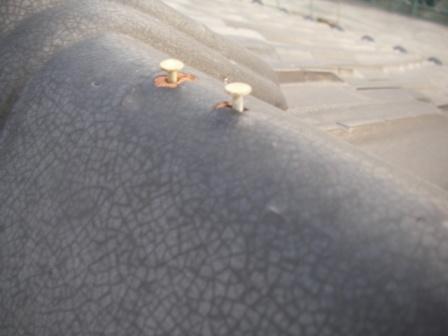 屋根釘緩み
